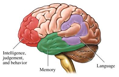 Alzheimers55