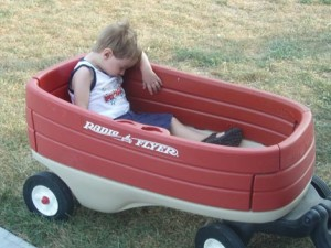 Brisan Asleep From Wagon Ride